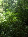 Thick secondary forest