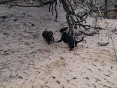 Skidaway Island with Jenn and Matt - 12.31.2013 - 13.29.54