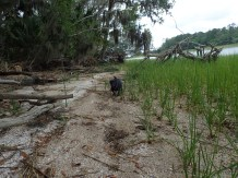 Skidaway with Kristen and Rich - 05.22.2016 - 13.04.02