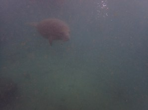 Manatee Dive and Tour - 02.18.2017 - 10.33.01