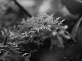 20180613 - Snails, Moss and Planarians 001