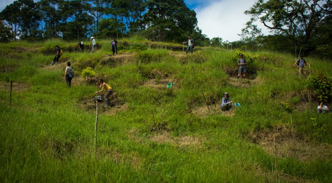 Reforestation at Finca Cantaros