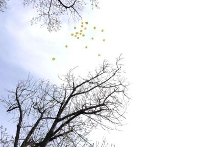 Wunschballons am Himmel-1