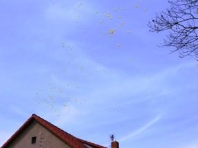 Wunschballons am Himmel-2