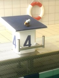 Schulcampus Königs Wusterhausen der FAWZ gGmbH_Schwimmlager Lindow 2020_1