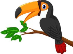 black and white toucan with orange bill sitting on branch