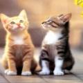 İKİ KÜÇÜK KEDİCİK ŞARKISI/ TWO LİTTLE KİTTY CATS SONG