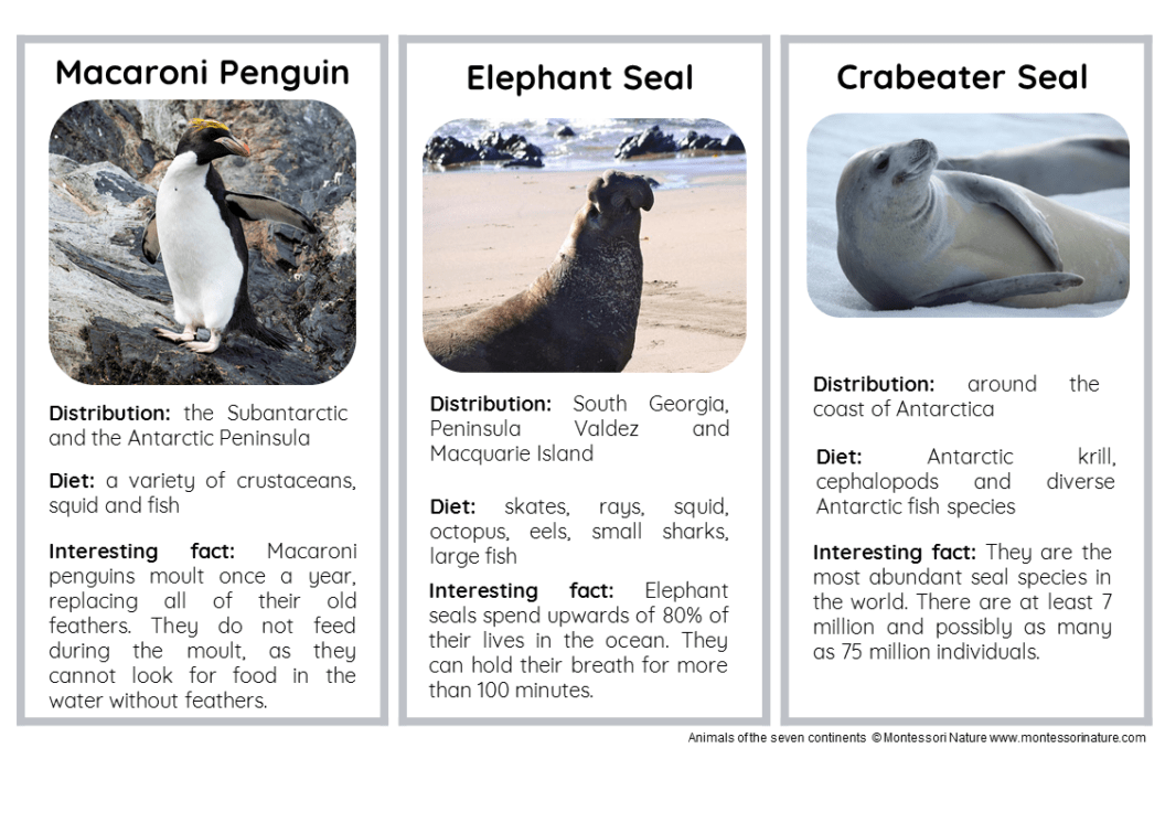 15 Animals Of Antarctica