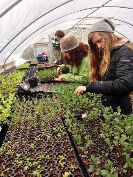 thinning seedlings