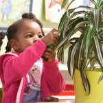Public, Private, or Something in Between? A New Model for Montessori Schools