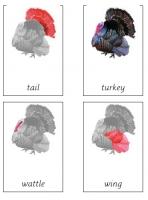 Parts of a turkey Montessori cards