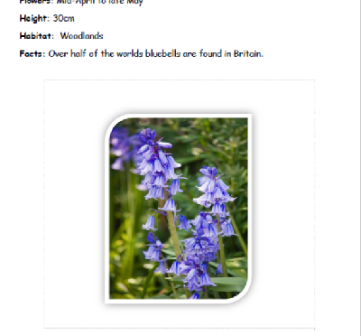 Flower Information pack for Forest schools.