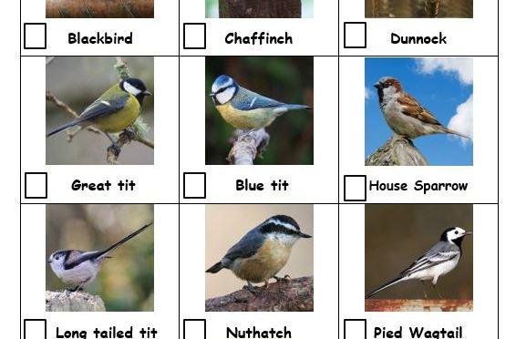 Garden birds check list