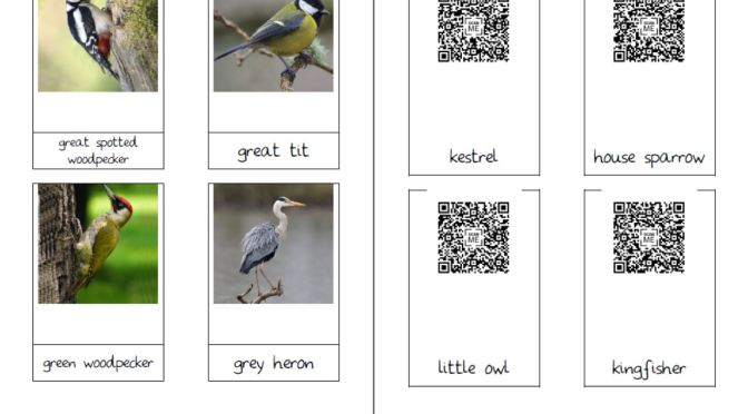 Bird cards with QR Codes – not shortened URL