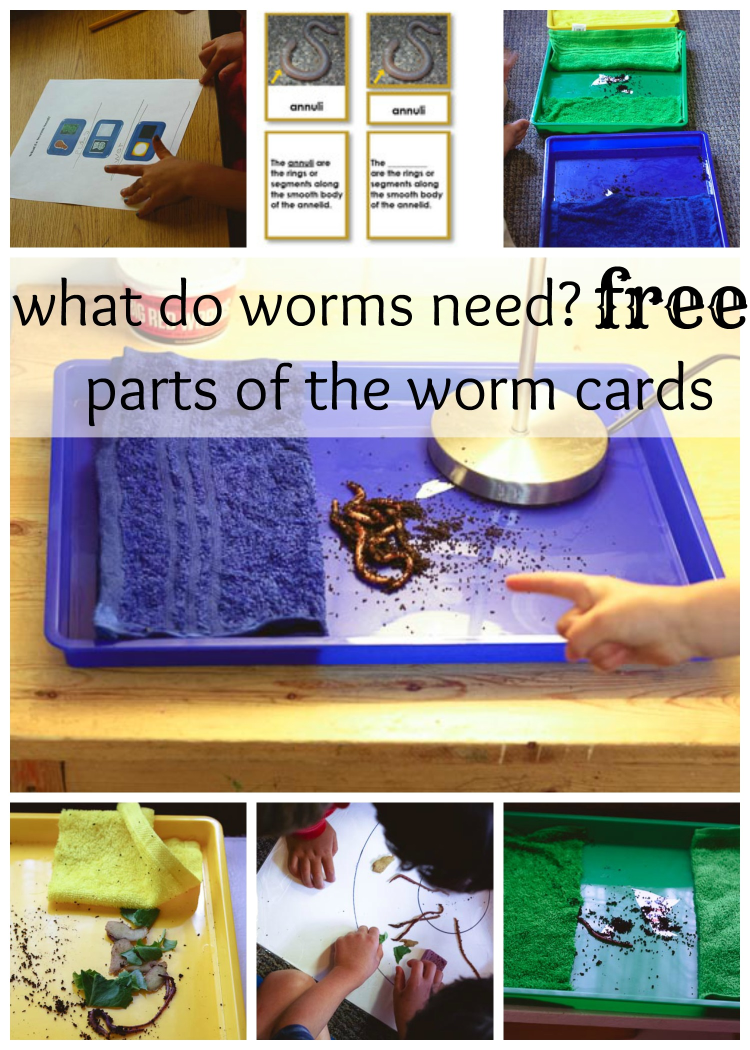 Fundamental Needs Of Worms