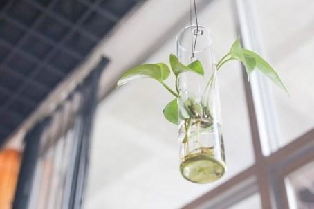 plante naturopathie