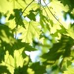 feuilles vertes dans la nature