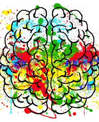 Le colliculus cause du TDAH ?