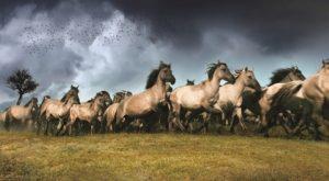 paarden-oostvaardersplassen