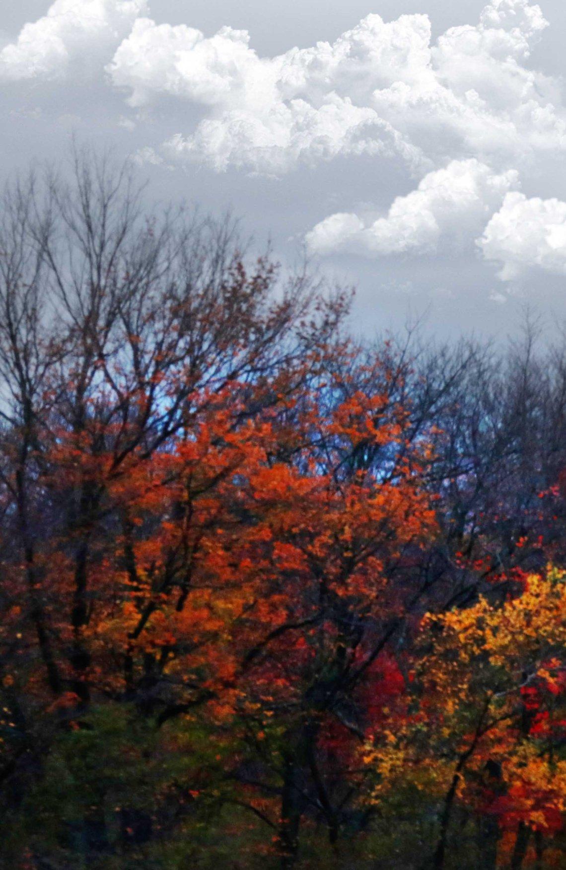 fall leaves massachusetts web