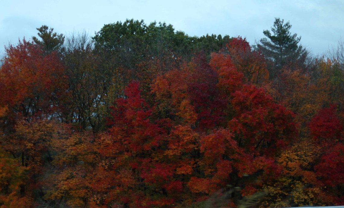fall leaves web