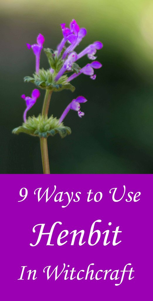 Using henbit dead nettle in witchcraft, spells, magic and handfasting.