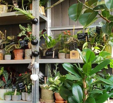 Nieuw: Planten-spreek uur
