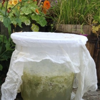 elderflower-champagne-bucket