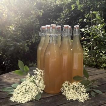 elderflower-champagne-recipe-bottles