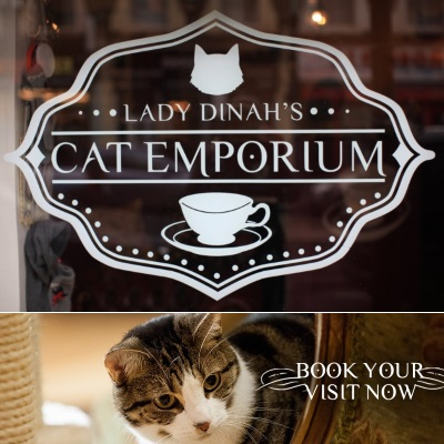cat cafes in london