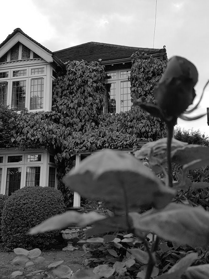 suburban horror rose house
