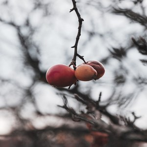 Autumn Moons and Apples: A Samhain Short Story by Chris Collins