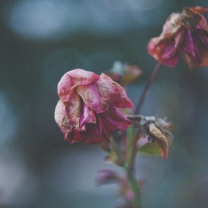 Poetry by Ellora Sutton- Death is a bit in everything I write, it is a bit in everything