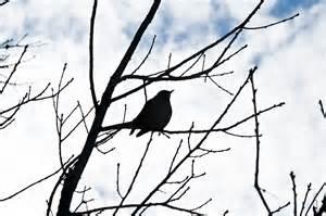 mockingbird4