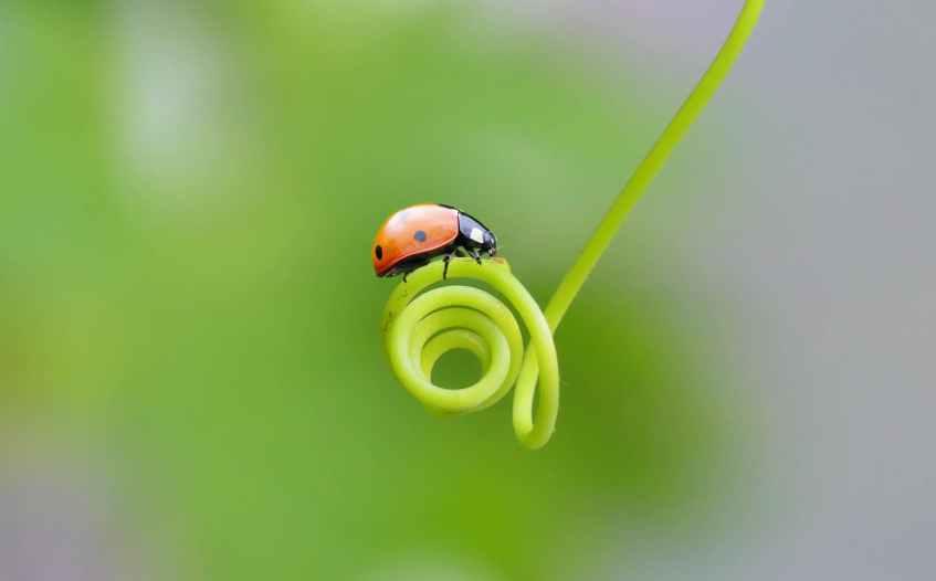 summer garden animal leaf