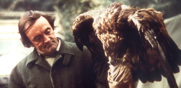 El Águila Calzada. Gavilanero. Mi gran y único maestro: Félix Rodríguez de la Fuente.