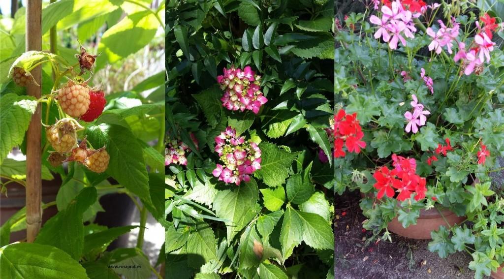 Montaje de flores de temporada.