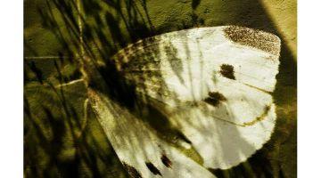 Metamorfosis (Las mariposas no leen a Kafka). Texto: Judith Bosch. Foto: Rafa Hierro.