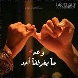 صور حب 57 1 - شات الحب افضل دردشة عربية غرف دردشة ممتعه