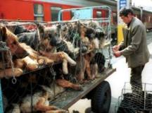 What are you waiting for? Stop Yulin Festival!