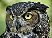 The Owl Experience: Up close and personal with one of nature's most picturesque exports