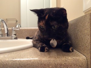Gato Cat Tortoiseshell Tortitude Bathroom Sink Counter Moore Approved