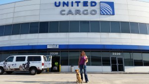 United Cargo - Traveling with a pet