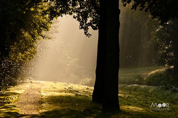 Licht Belangrijker Locatie Herfst Herfstfotografie Workshop