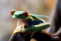 Foto's Tropical Zoo Berkenhof Kwadendamme Vlinders Reptielen