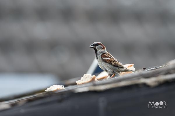 De Wondere Wereld van Vogelfotografie