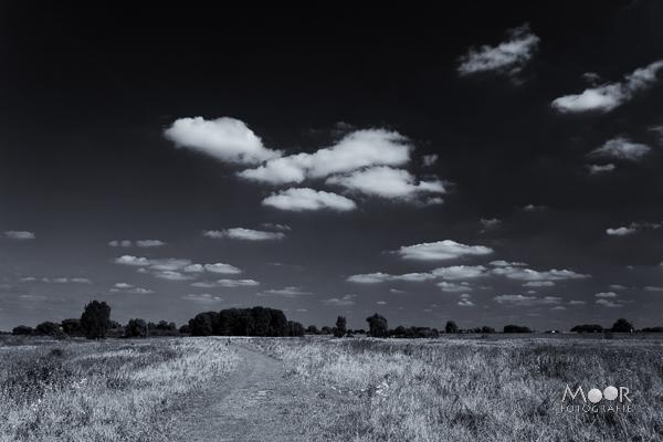 Woordloze Woensdag Hollands Landschap Woudrichem Groesplaat Natuurgebied Zwart-wit
