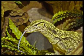 Resultaten Wim Sanders Reptielen Fotografie Dag