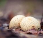 Herfstfotografie Tip Close-up met Macrolens