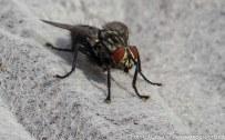 Insekten-Fest (8 von 12)